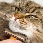 cat-comb